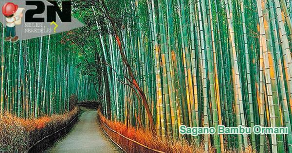 Sagano Bambu Ormanı